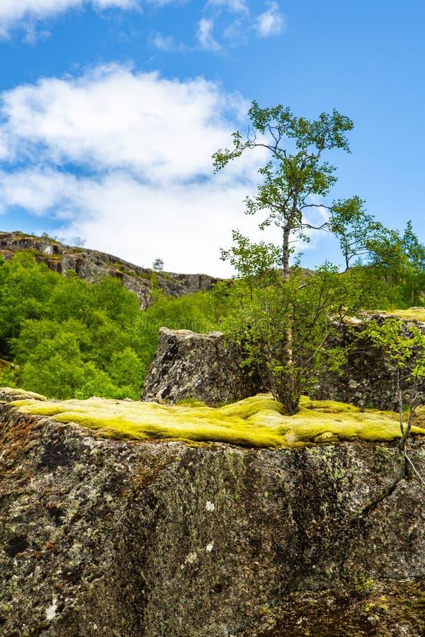 Δασικός-tundra στη Νορβηγία στοκ φωτογραφία με δικαίωμα ελεύθερης χρήσης