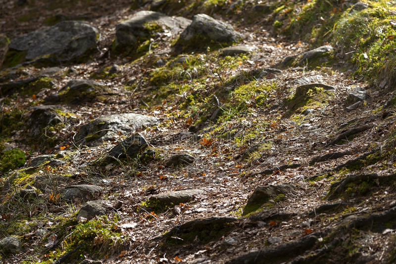 Δασικό ίχνος πέρα από τους βράχους, τις πέτρες και την πράσινη χλόη την πρώιμη άνοιξη στοκ φωτογραφίες