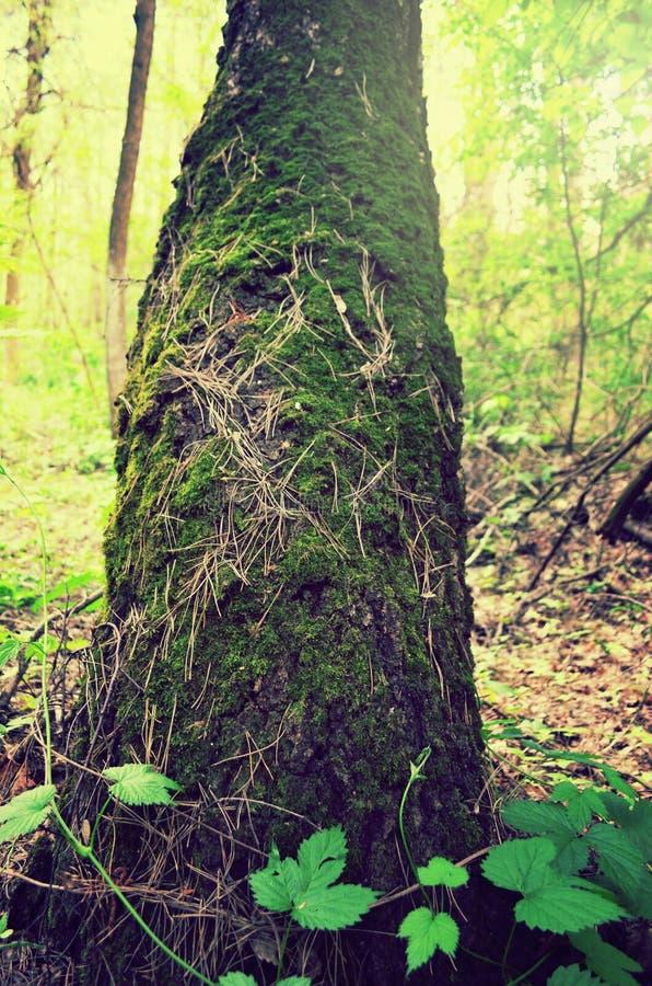 Δασικό βρύο την άνοιξη, πράσινο δάσος άνοιξη στοκ εικόνες με δικαίωμα ελεύθερης χρήσης