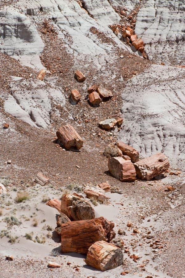 δασικό εθνικό πάρκο που π&epsi στοκ φωτογραφία με δικαίωμα ελεύθερης χρήσης