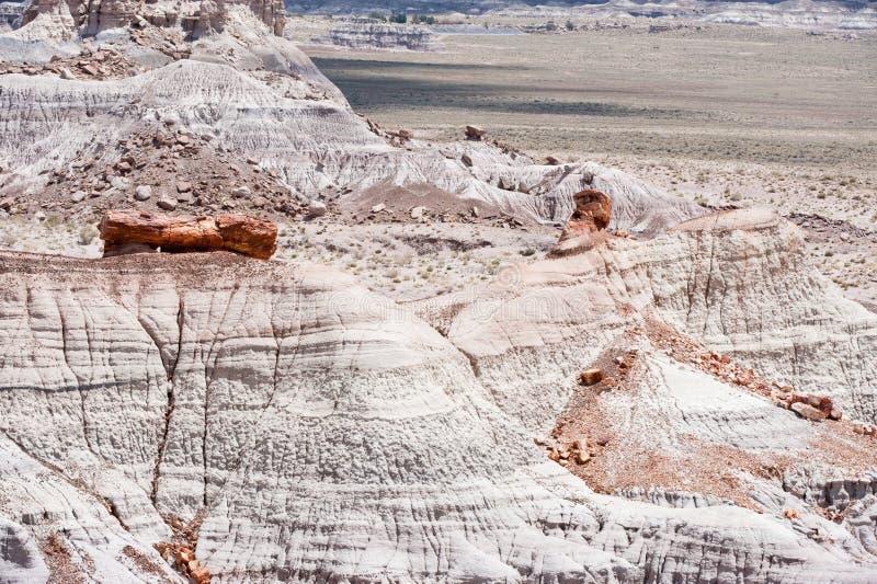 δασικό εθνικό πάρκο που π&epsi στοκ φωτογραφίες