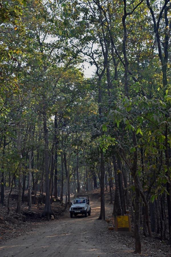 Δασικό εθνικό πάρκο σαφάρι, Ινδία στοκ φωτογραφίες με δικαίωμα ελεύθερης χρήσης