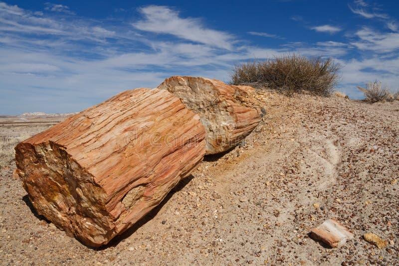 δασικό εθνικό πετρώνω πάρκ&omicr στοκ εικόνες