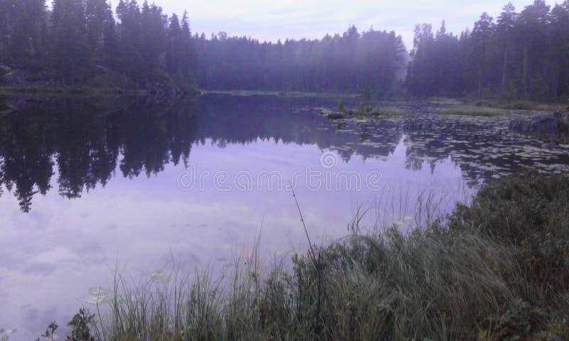 Δασικό καλοκαίρι νερού φύσης της Σουηδίας στοκ εικόνες