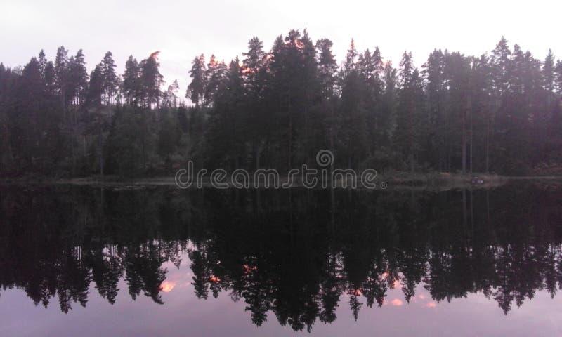 Δασικό καλοκαίρι νερού φύσης της Σουηδίας στοκ εικόνες με δικαίωμα ελεύθερης χρήσης