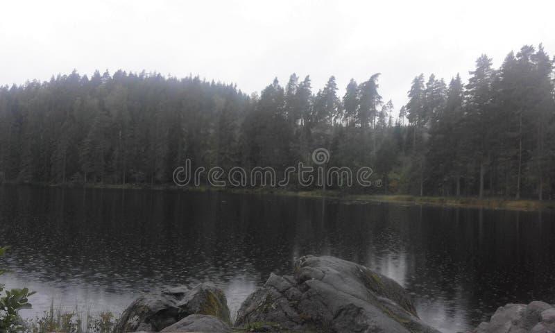 Δασικό καλοκαίρι νερού φύσης της Σουηδίας στοκ εικόνα