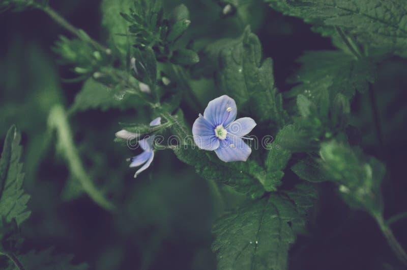Δασικό λουλούδι την άνοιξη, πράσινο δάσος άνοιξη στοκ εικόνες