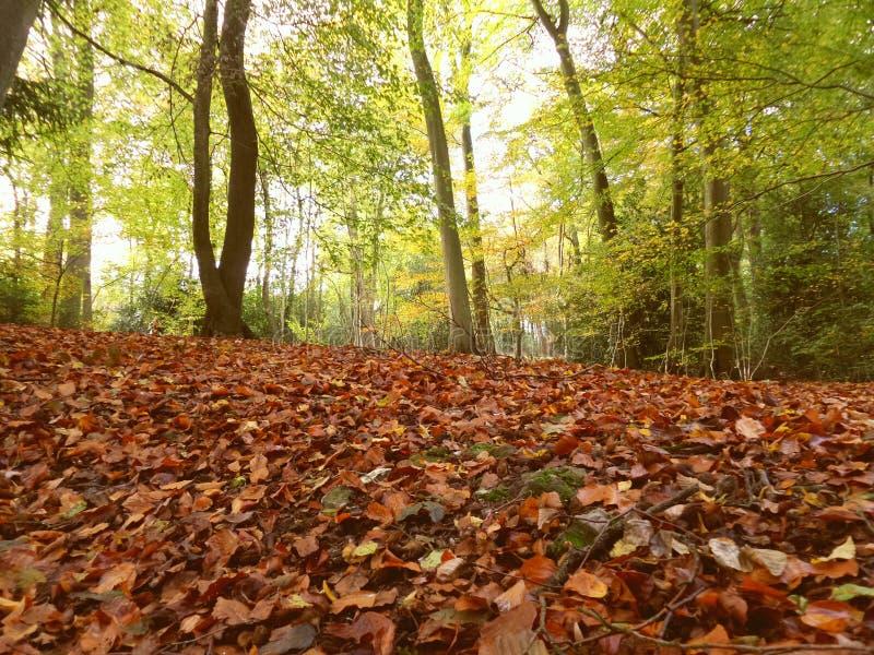 Δασικό πάτωμα φθινοπώρου στοκ εικόνα με δικαίωμα ελεύθερης χρήσης