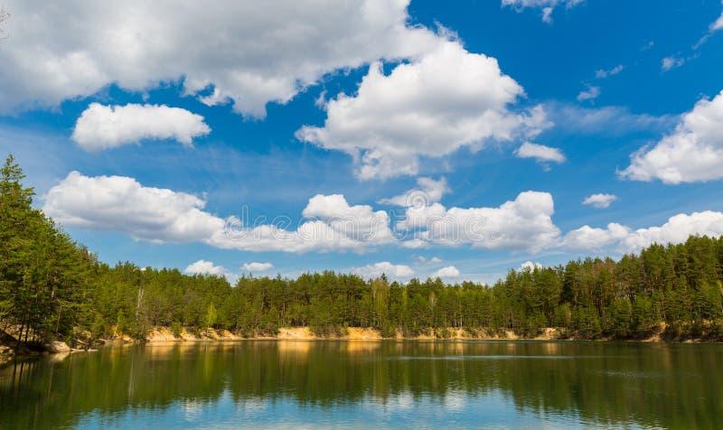 δασικό πεύκο λιμνών στοκ εικόνα