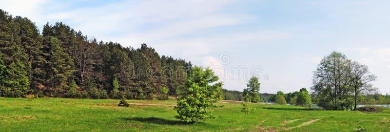 δασικό πράσινο πεύκο λιβ&alpha στοκ εικόνες