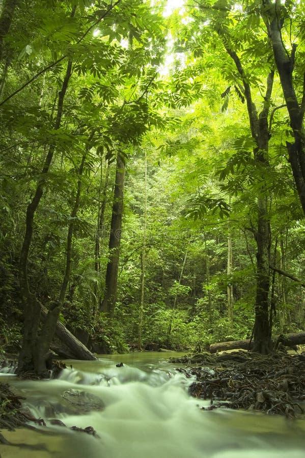 δασικό πράσινο ρεύμα στοκ εικόνες