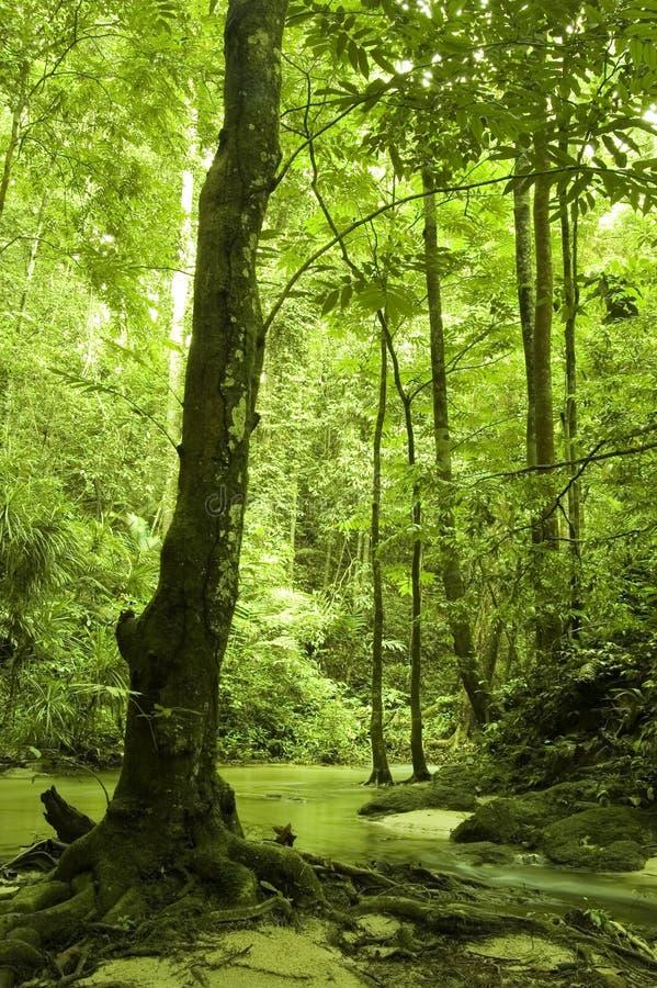δασικό πράσινο ρεύμα στοκ φωτογραφία με δικαίωμα ελεύθερης χρήσης