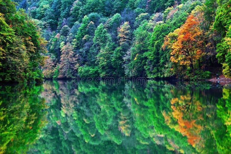 δασικό πρωί λιμνών φθινοπώρ&omicro στοκ εικόνα με δικαίωμα ελεύθερης χρήσης