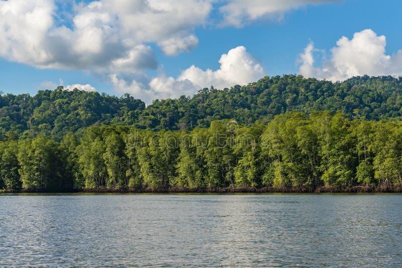 Δασικό τοπίο μαγγροβίων, Κόστα Ρίκα στοκ εικόνες