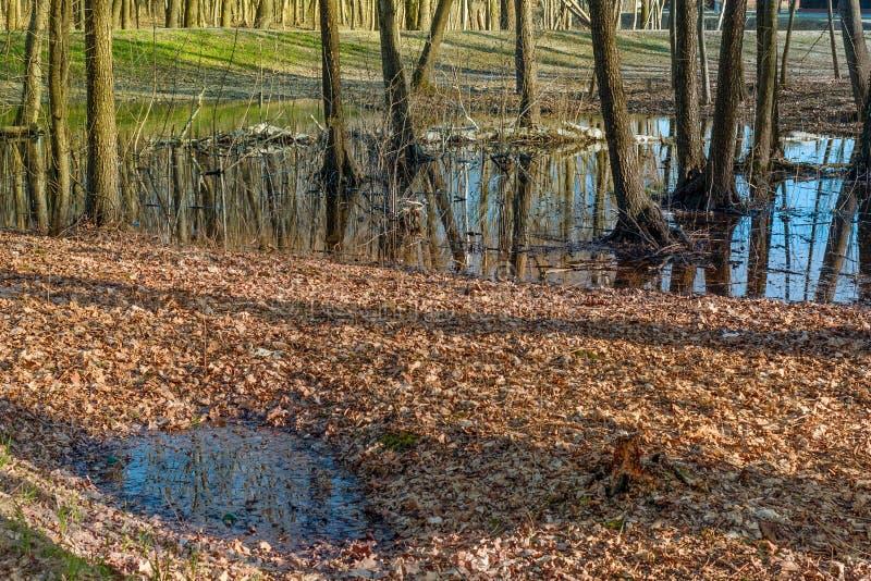 Δασικό τοπίο μετά από thaw άνοιξη στοκ εικόνα