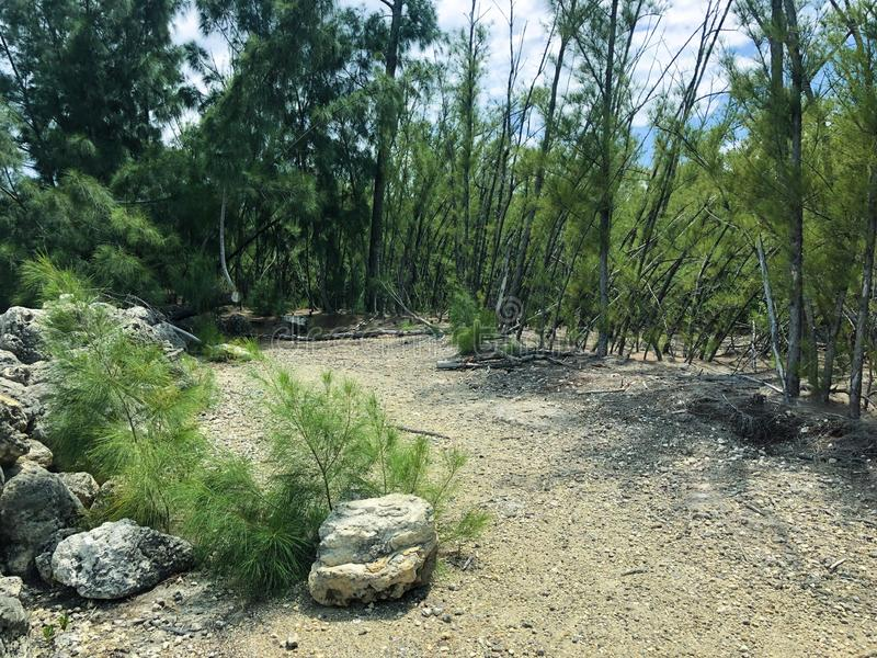 Δασικό τοπίο μια ηλιόλουστη ημέρα στοκ εικόνες με δικαίωμα ελεύθερης χρήσης