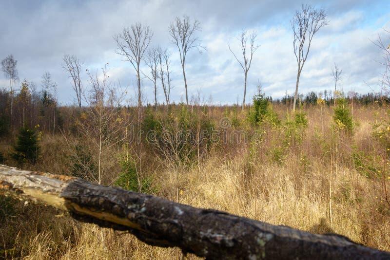 Δασικό τοπίο το φθινόπωρο από τον πύργο εξέτασης κυνηγών ` s στοκ εικόνα