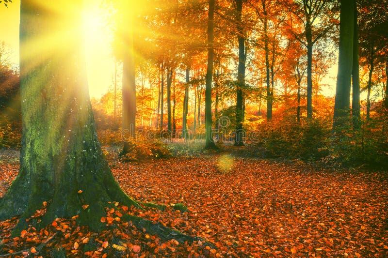 Δασικό τοπίο φθινοπώρου με το μεγάλο δέντρο και χώμα που καλύπτεται από πεσμένος στοκ εικόνες