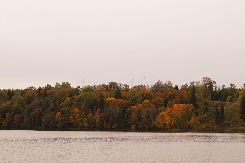 Δασικό τοπίο φθινοπώρου στο πάρκο με τον ποταμό στοκ εικόνα
