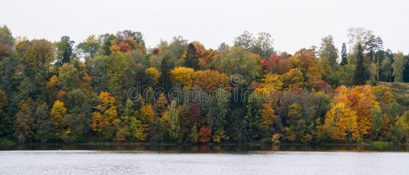 Δασικό τοπίο φθινοπώρου στο πάρκο με τον ποταμό στοκ εικόνες