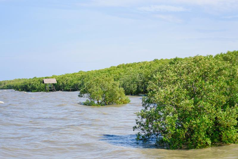 Δασικό τροπικό τροπικό δάσος μαγγροβίων στην ακτή στην Ταϊλάνδη στοκ εικόνες