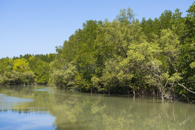 Δασικό τροπικό τροπικό δάσος μαγγροβίων στοκ εικόνα