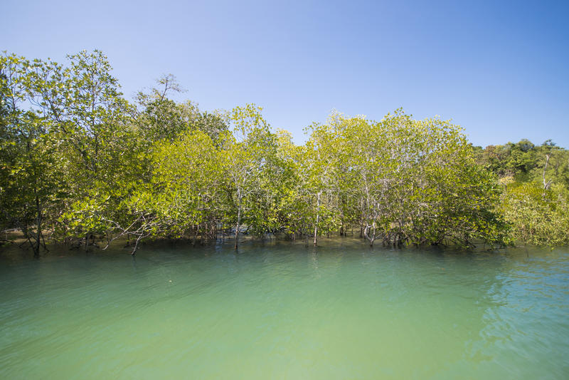 Δασικό τροπικό τροπικό δάσος μαγγροβίων στοκ εικόνες με δικαίωμα ελεύθερης χρήσης
