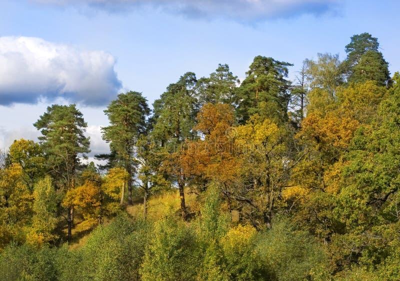 Δασικό φθινόπωρο τοπίων Μικτό δάσος - πεύκα, βαλανιδιές και θάμνοι στοκ εικόνες