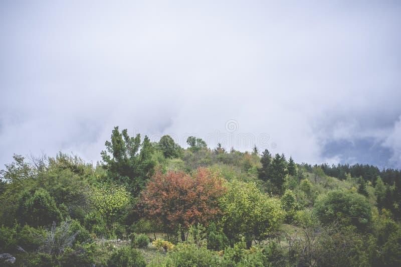 Δασικό φθινόπωρο στοκ εικόνα με δικαίωμα ελεύθερης χρήσης