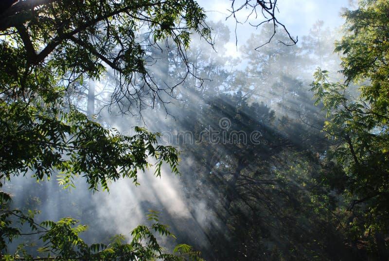 δασικό φως του ήλιου καπνού πυρκαγιάς στοκ φωτογραφία με δικαίωμα ελεύθερης χρήσης