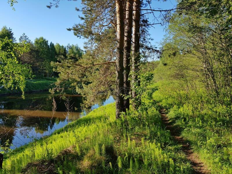 Πορεία στα ξύλα Δασικό όμορφο ελατήριο ποταμών την άνοιξη στοκ φωτογραφία με δικαίωμα ελεύθερης χρήσης