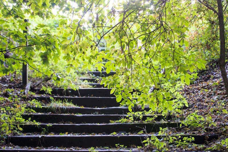 Δασόβια βήματα στοκ εικόνα