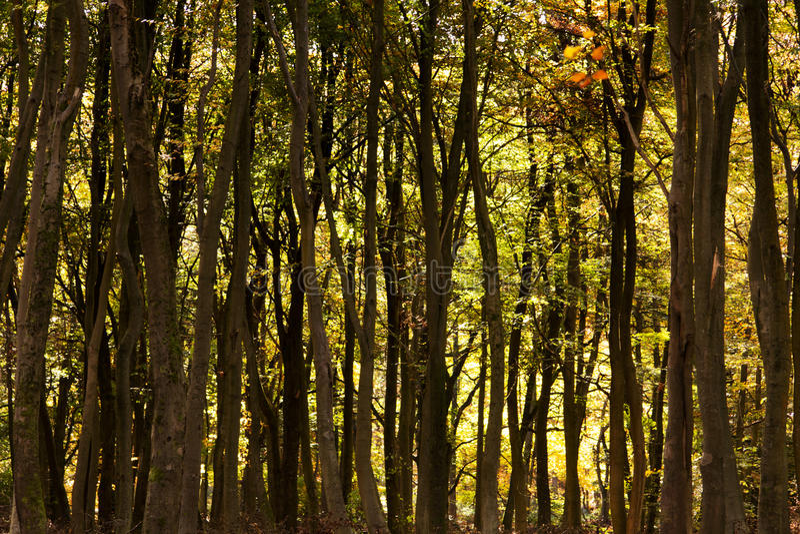 Δασόβια σκηνή με τα κίτρινα και καφετιά φύλλα φθινοπώρου στοκ φωτογραφίες