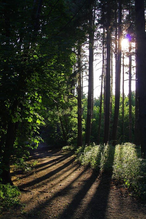Δασόβια σκηνή με τη σκιά και τη διάβαση στοκ φωτογραφίες
