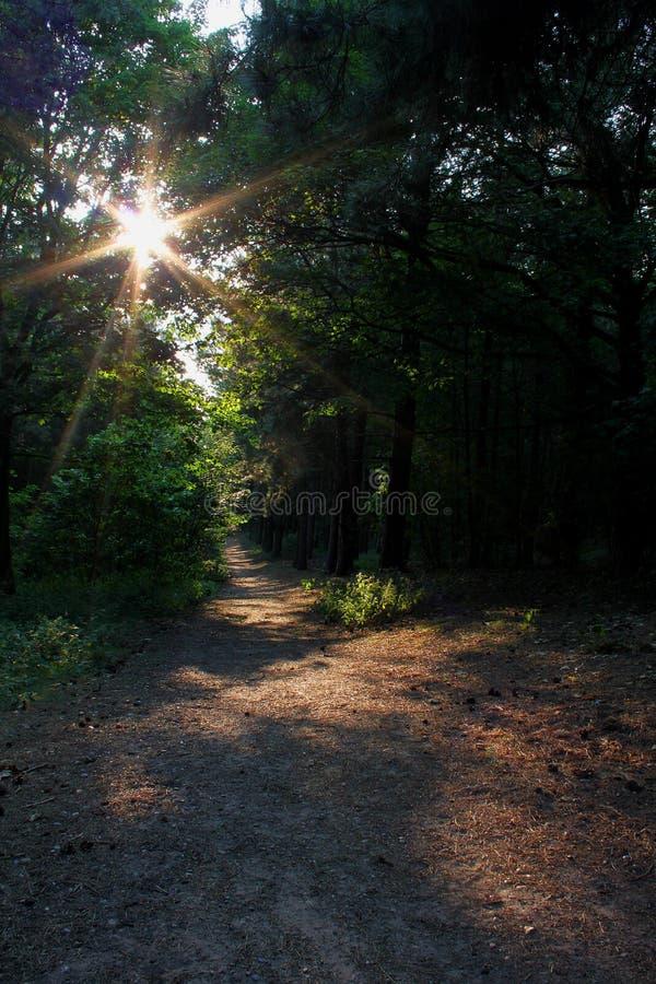 Δασόβια σκηνή με τη σκιά στοκ εικόνες