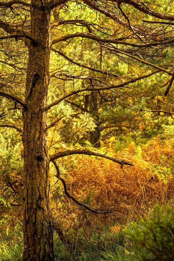 Δασόβια σκηνή φθινοπώρου στοκ φωτογραφίες
