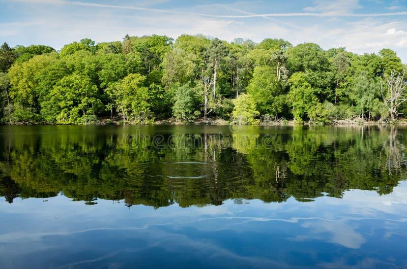 Δασώδης περιοχή, αντανακλάσεις λιμνών και κυματισμοί στο Shropshire, UK στοκ εικόνα