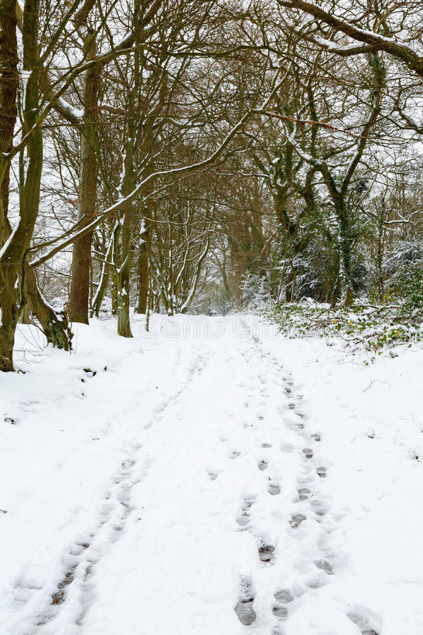 Δασώδης περιοχή στο χιόνι στοκ εικόνες