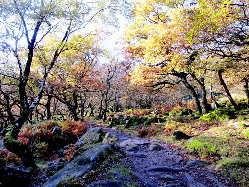 Δασώδης περιοχή, Derbyshire στοκ φωτογραφίες με δικαίωμα ελεύθερης χρήσης