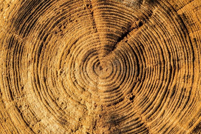 Δαχτυλίδια ζωής του παλαιού κούτσουρου στοκ εικόνα με δικαίωμα ελεύθερης χρήσης