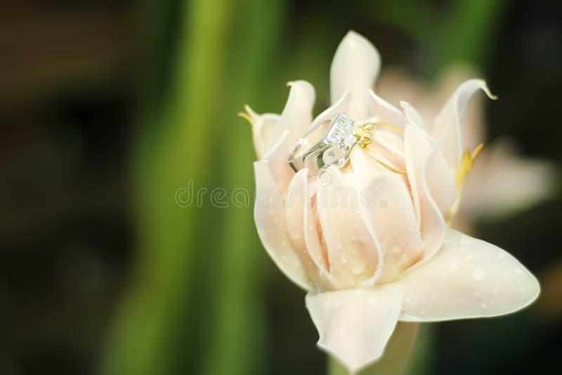 Δαχτυλίδι στο λουλούδι στοκ φωτογραφία