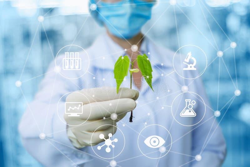 Δείγμα εγκαταστάσεων στα χέρια ενός biotechnologist στοκ φωτογραφία