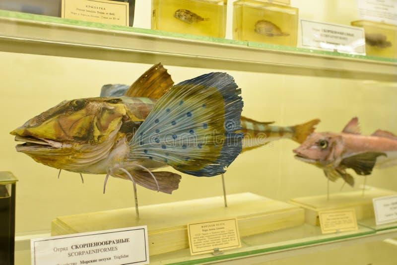 Δείγμα ψαριών στο μουσείο στοκ φωτογραφία με δικαίωμα ελεύθερης χρήσης