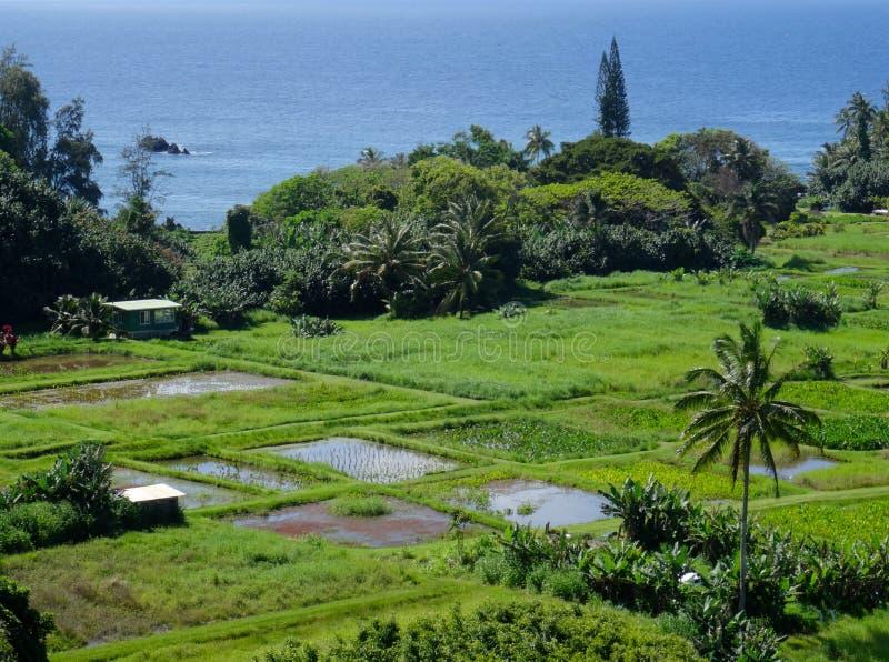 Δείτε έναν αγροτικό τομέα σε Maui στοκ φωτογραφίες