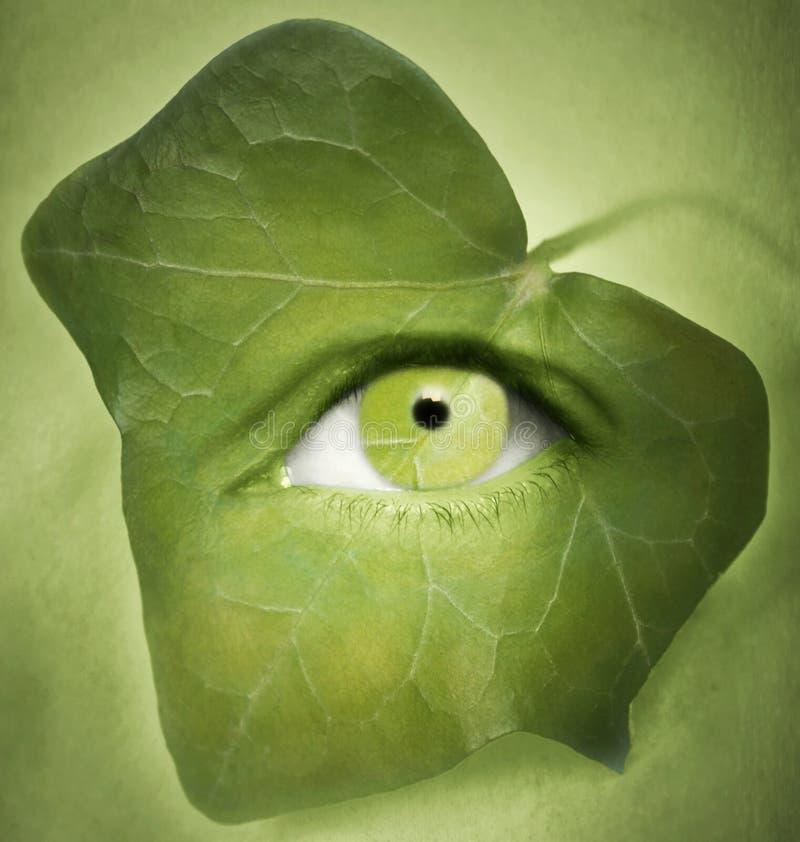 Δείτε πράσινο στοκ εικόνα