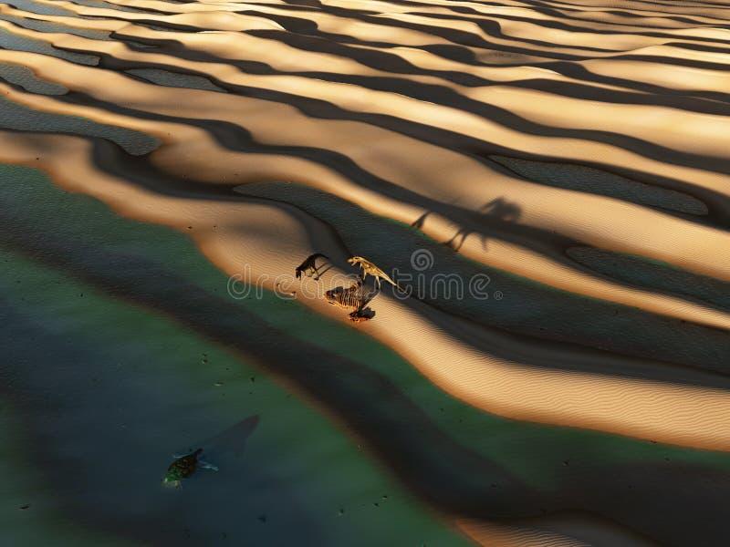 Δεινόσαυροι prowl η έρημος απεικόνιση αποθεμάτων