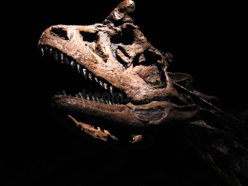 Δεινόσαυρος/τυραννόσαυρος στοκ εικόνα