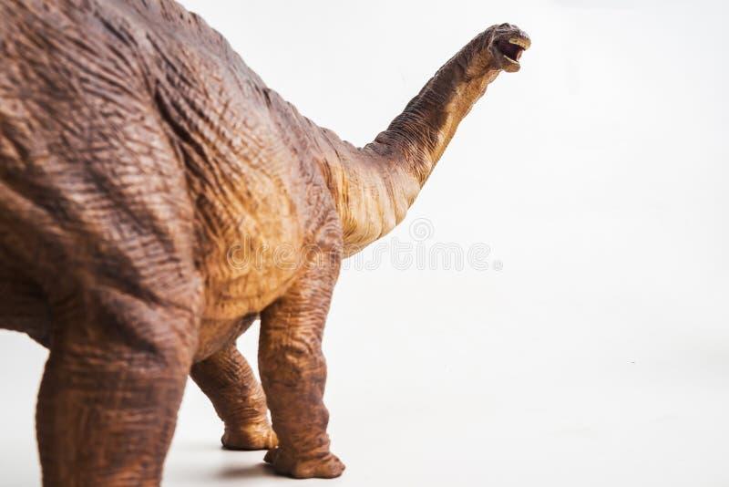 Δεινόσαυρος, Apatosaurus στο άσπρο υπόβαθρο στοκ εικόνα