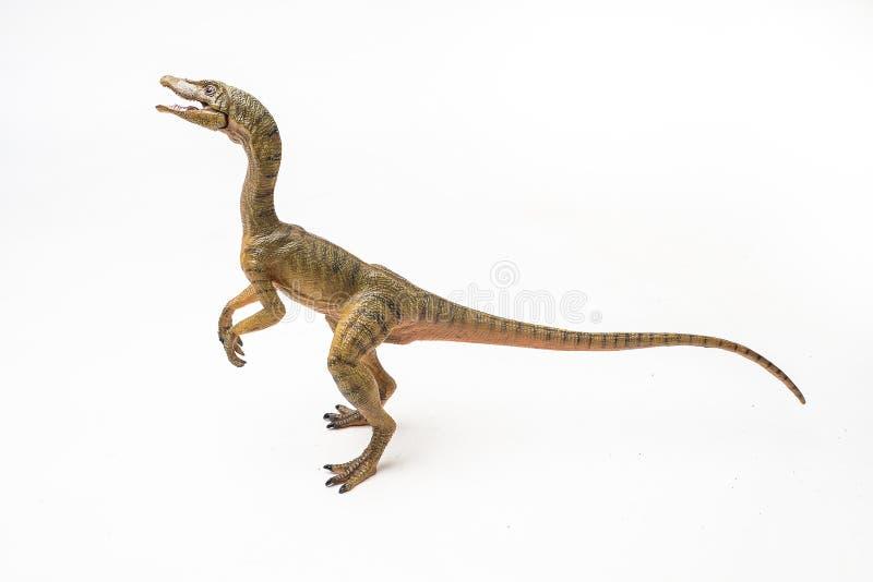 Δεινόσαυρος Compsognathus στο άσπρο υπόβαθρο στοκ εικόνα
