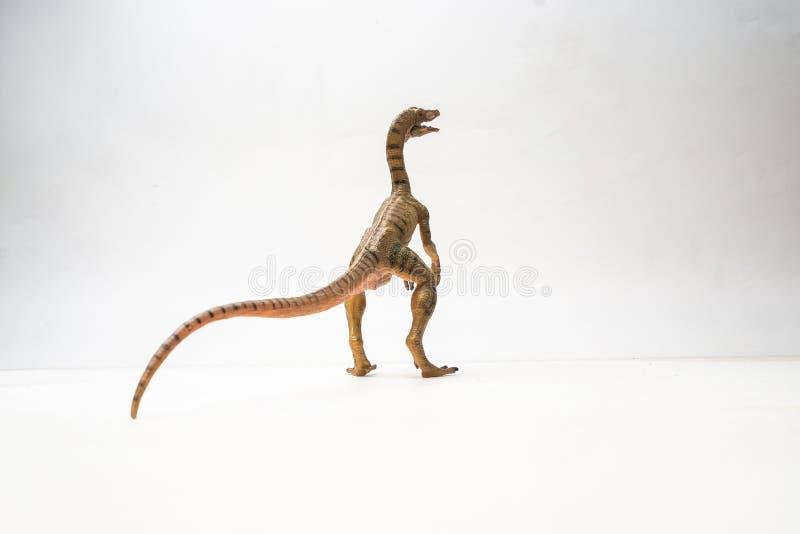 Δεινόσαυρος Compsognathus στο άσπρο υπόβαθρο στοκ εικόνες με δικαίωμα ελεύθερης χρήσης
